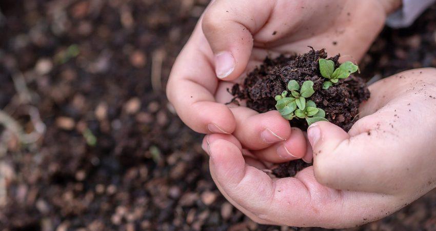Die Landwirtschaft braucht Saisonarbeitskräfte – Appell an alle politisch Verantwortlichen