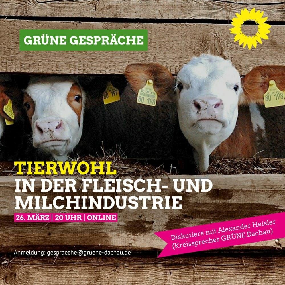 Tierwohl in der Fleisch- und Milchindustrie?